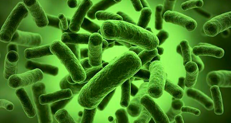 Gut Bacteria Fit Nation